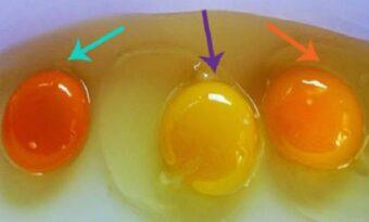 Så HÄR ser du om dina ägg kommer från en sjuk höna!
