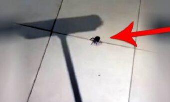 Rädd för spindlar? Den här mannen visar varför du aldrig ska döda dem!