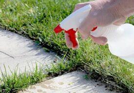 Spraya denna blandning på ogräs – bli av med det för alltid!