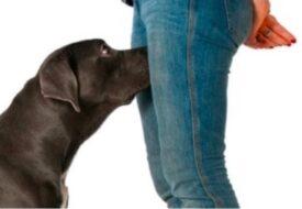 Varför luktar hundar oss mellan benen? Detta hade jag aldrig kunnat gissa!