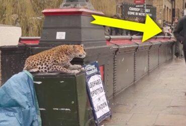 Mannen ser inte den lösa leoparden – då får hans sitt livs största chock!