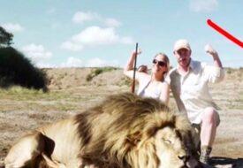 Dom har precis skjutit ett lejon – men kolla vem som då tar hämnd! Karma!