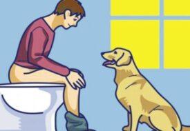 Om hunden följer med in i badrummet, ignorera den inte: här är vad den försöker berätta för dig