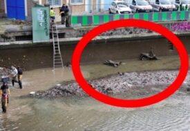 Kommunen tömmer kanalen på allt vatten – det dom hittar ger mig rysningar!