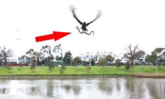 Han filmar en hök fånga en orm! Men vad som händer då är OTROLIGT!